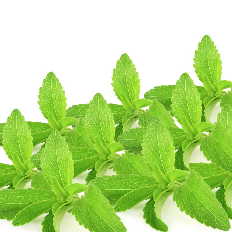 stevia-sugar-substitute-herbs-leaves-pure-white-background-fresh-56651067