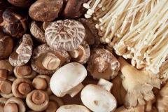 Mushrooms-National-University-of-Singapore-Released