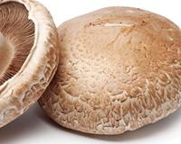 portobello_mushroom